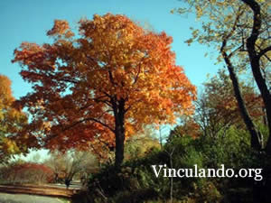This is Vinculando.org English page