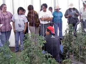 Visita de acompañamiento a productores de jitomate en invernadero. Las personas con libreta son del Comité de Certificación