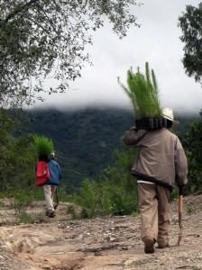 1-reforestacion2008-yanhuitlan
