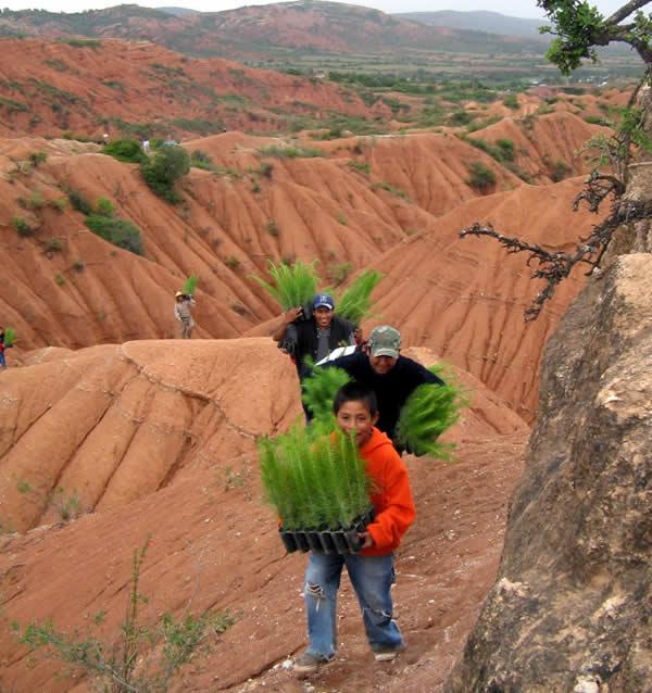 2-reforestación2008-yanhuitlán