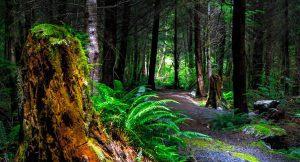Actividades para fortalecer la educación ambiental