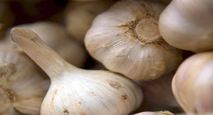 Cómo tratar la hipertensión y aterosclerosis con ajo