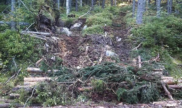 deforestacion-musgos