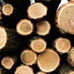 Empresas forestales: hacia un análisis económico detallado