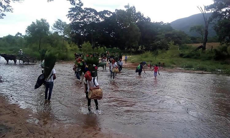 Espadañeros cruzando el río de Santa Marta. Ramírez, Vázquez F. A. (2018)