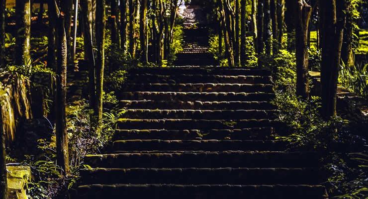 La inteligencia y su proceso de maduración: una invitación para pensar