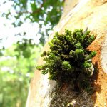 Fundamentales, los musgos para capturar carbono y evitar la erosión