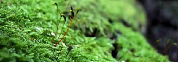 Daños ambientales por extraer musgos del ecosistema