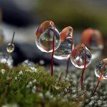 7 hechos poco conocidos del musgo en Navidad
