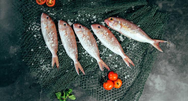 Plan de negocios para taller de embutidos de pez en Campeche