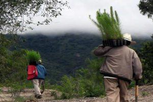 Yanhuitlán: un pueblo mixteco de tequio y conservación
